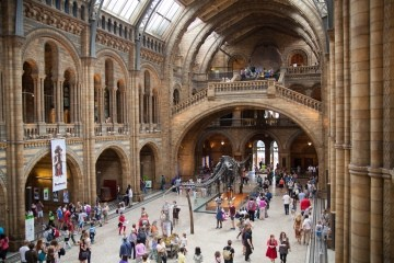 The diplodocus is the main attraction of the Natural History Museum.