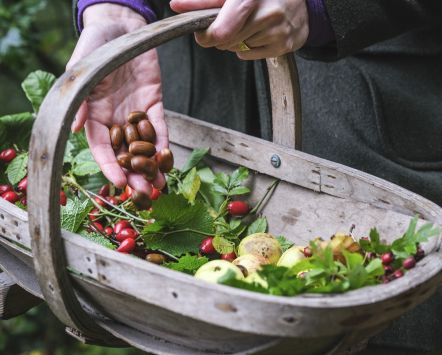 Northumberland foraging and wild cooking