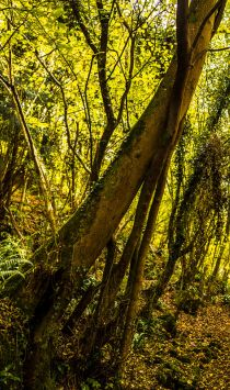 Forest dean landscape