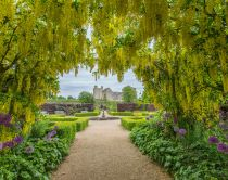 Credit to Helmsley Walled Garden. Laburnum and castle. Secret Garden film location.