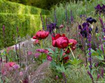Vue détaillée d'une plantation, avec des fleurs rouges, bleues et violettes. Photographié au RHS Chelsea Flower Show montrant un détail de la plantation dans le Jardin Laurent-Perrier conçu par Luciano Giubbilei.