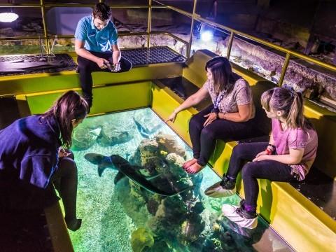 Brighton sea life aquarium visitbritain