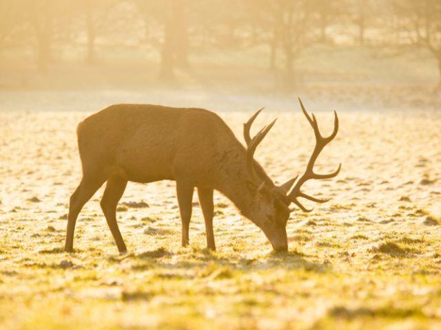 Planes para disfrutar del invierno en el sur de Inglaterra