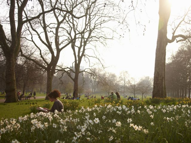 Park met narcissen in Londen