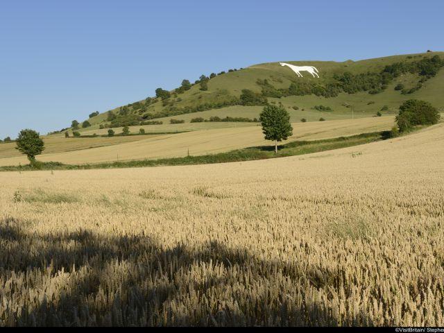 Cerchi nel grano nel Wiltshire