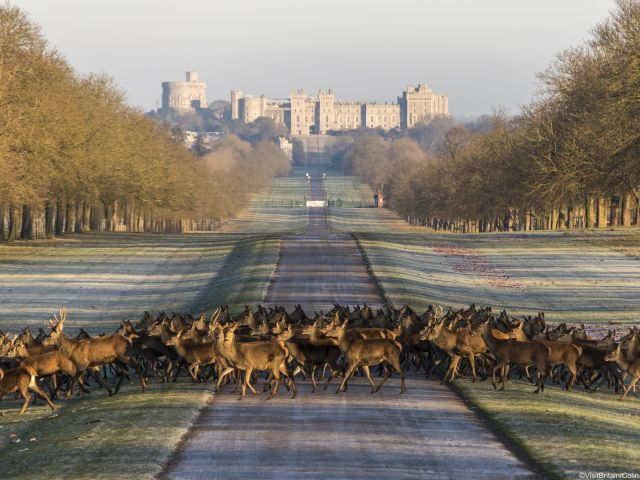 Windor Castle in England