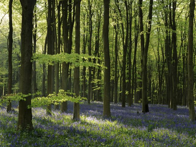 Top things to do in Britain in spring