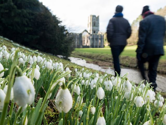 Snowdrops at Fountains Abbey, Yorkshire, England