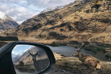 View from car window, deers and river, Glen Etive, Scotland