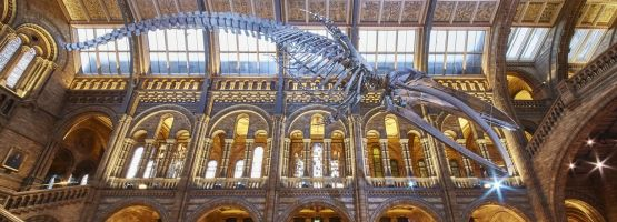 Le Hintze Hall du Natural History Museum