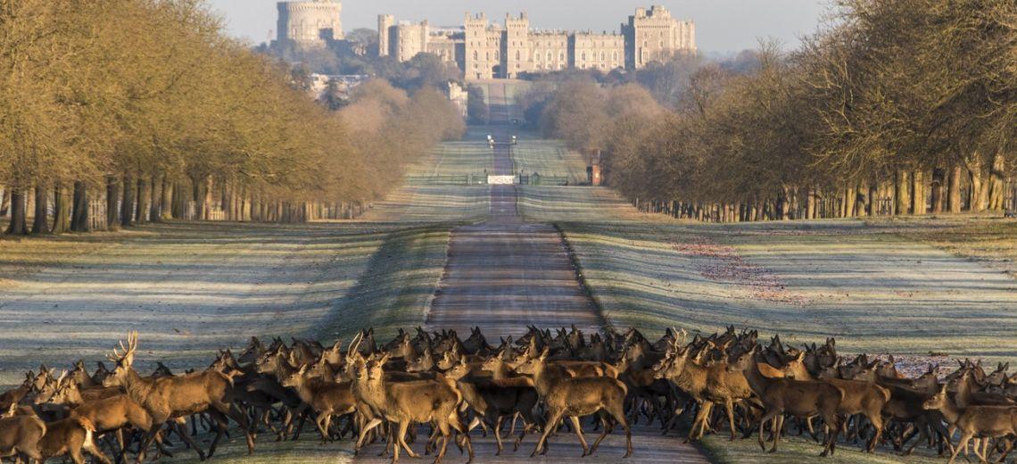 Invierno en el castillo