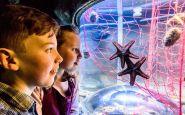 SEA LIFE Brighton Aquarium
