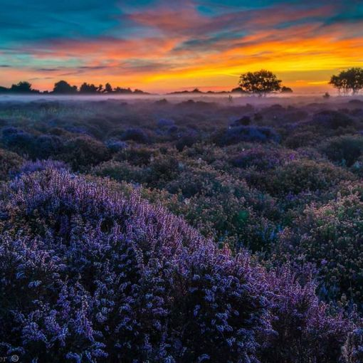 Suffolk coast finery