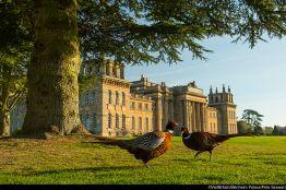 Blenheim Palace, Woodstock, England