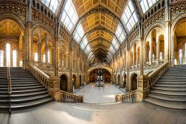 The Natural History Museum in Kensington is a huge building designed by Alfred Waterhouse, and is a fine example of the Romanesque style of architecture. There is a large dinosaur exhibited in a gallery with a vaulted roof with glass. This image must be r