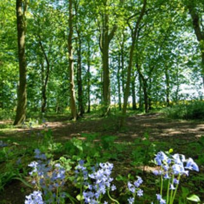 Woldgate Wood, East Yorkshire