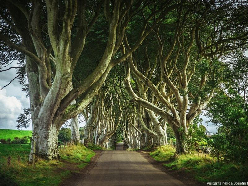 Dark Hedges, a road surrounded by trees in Northern Ireland