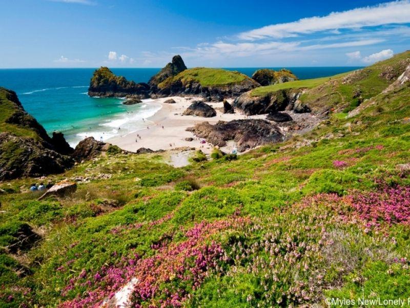 Colline fiorite di erica sopra kynance Cove, Lizard Penisnula