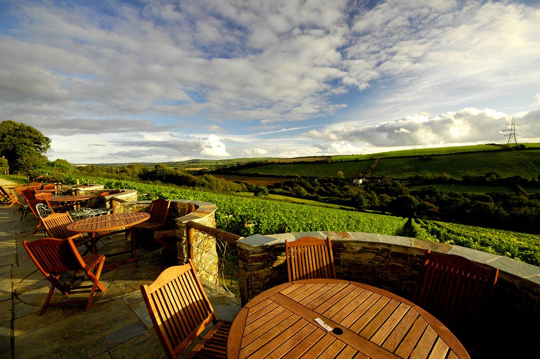 Camel Valley Vineyard, Cornwall
