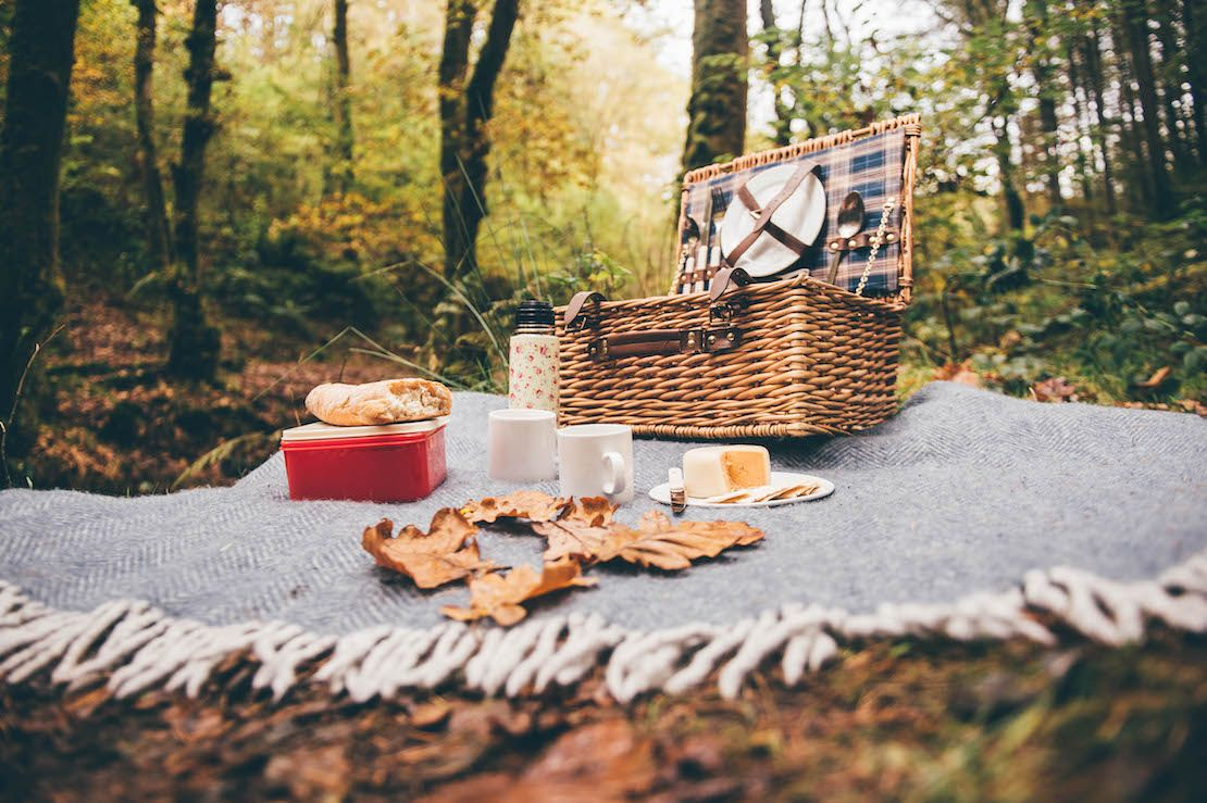 Picnic basket laid out in the woods