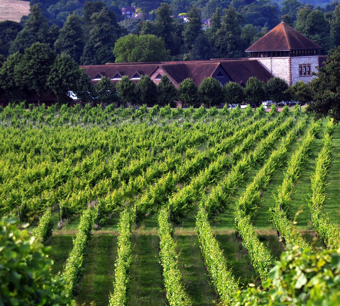 Denbies vineyard, Surrey