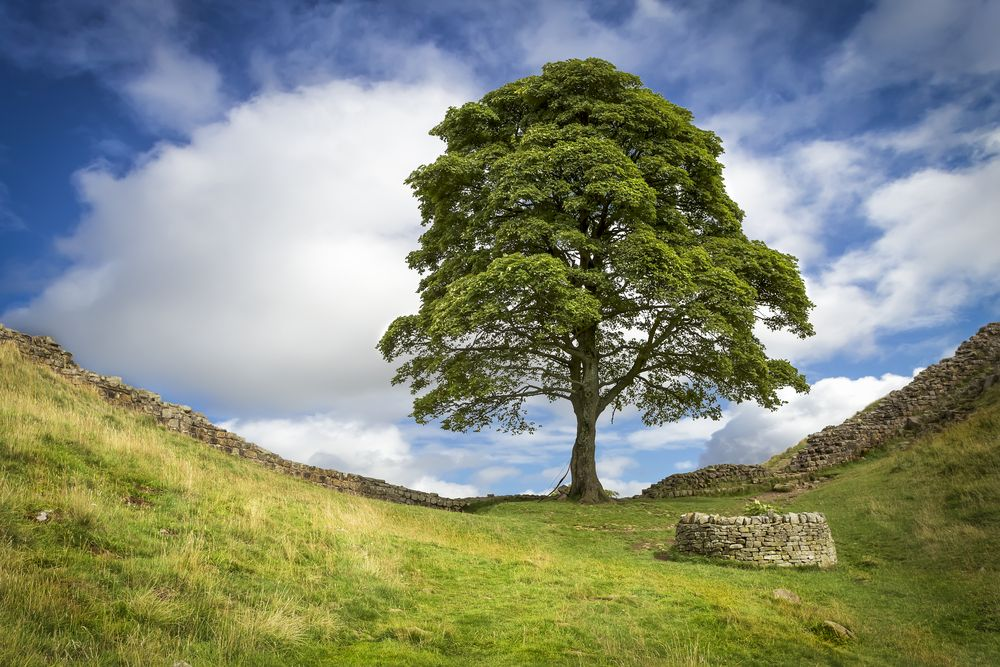 Celeb spotting: movie-famous trees and where to find them   VisitBritain