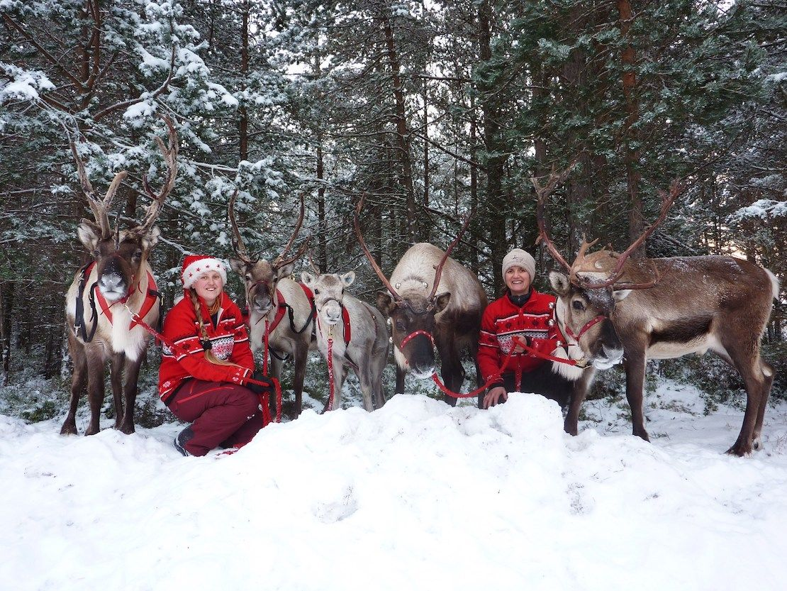 Christmas team at The Cairngorm Reindeer Centre with reindeer in the snow