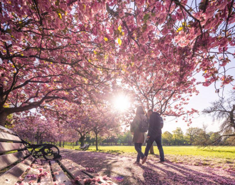 People walking in Greenwich Park, London, England in spring.