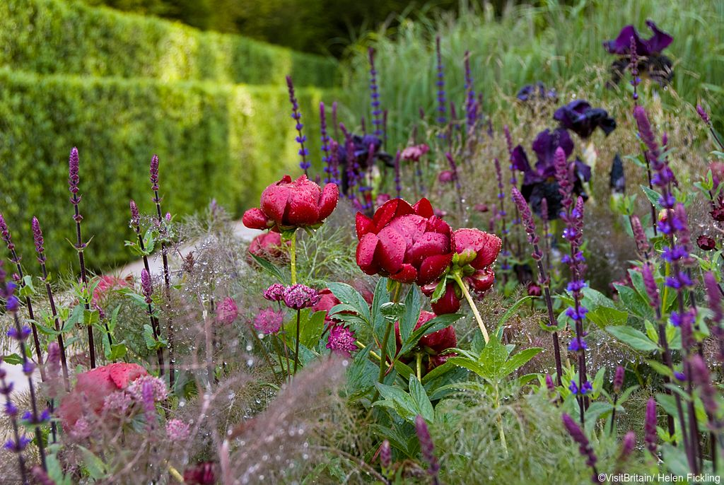 Detail view of planting in a mixed border, with red, blue and purple flowerheads of varying shapes. Photographed at the RHS Chelsea Flower Show showing a detail of the planting in The Laurent-Perrier Garden designed by Luciano Giubbilei.