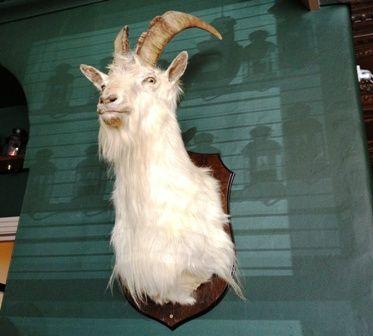 The Shambles Goat Morpeth - photo by Zoe Dawes