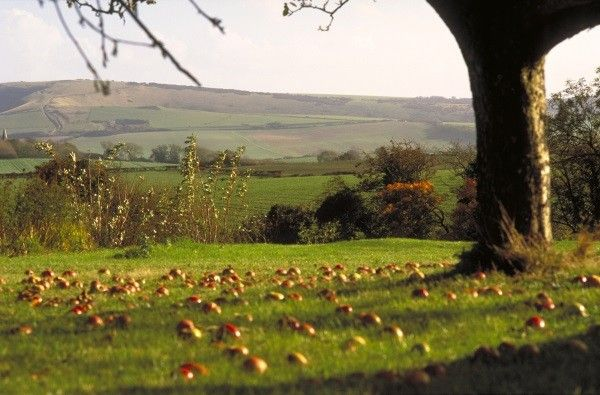 Alciston, South Downs, East Sussex, England.