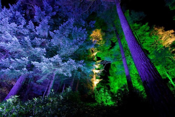 Enchanted Forest (c) GRAHAM SMITH