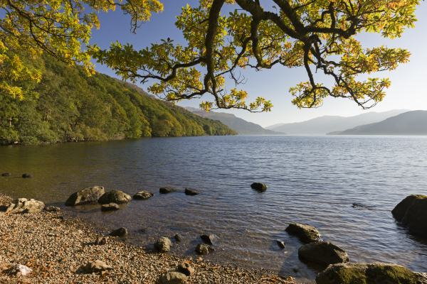 Autumnal colours of trees on the shores of Loch Lomond.