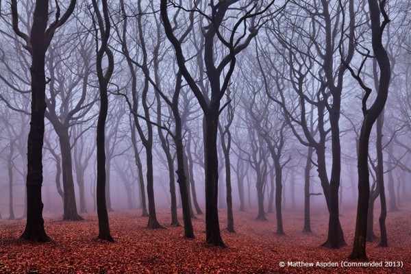 Tandle Woods in Fog, Oldham, Lancashire, England