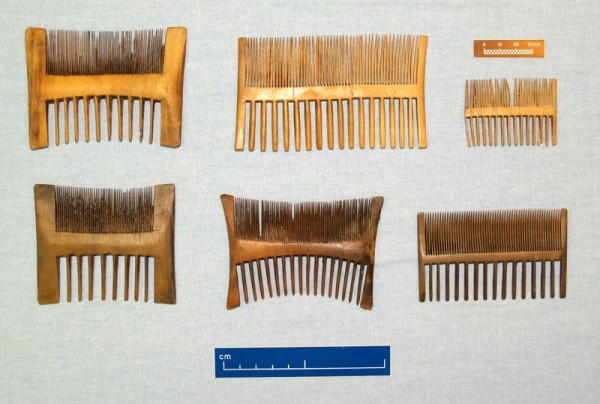 A selection of nit combs that belonged to the Mary Rose's crew ©Mary Rose Trust